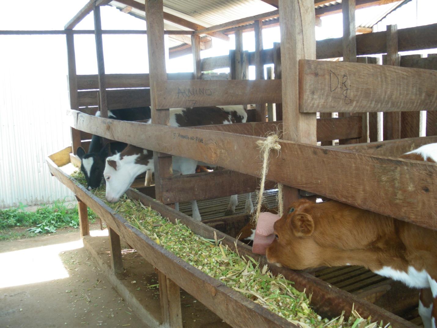 Income generating activities income generating activities modern zero grazing unit